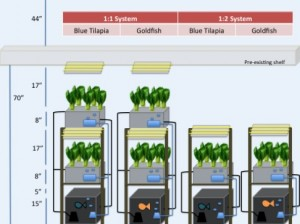 Preliminary design layout for ISB's aquaponics system