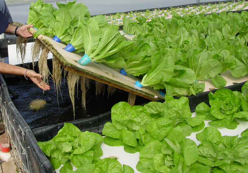 Comparing The Different Methods Of Aquaponics Growing