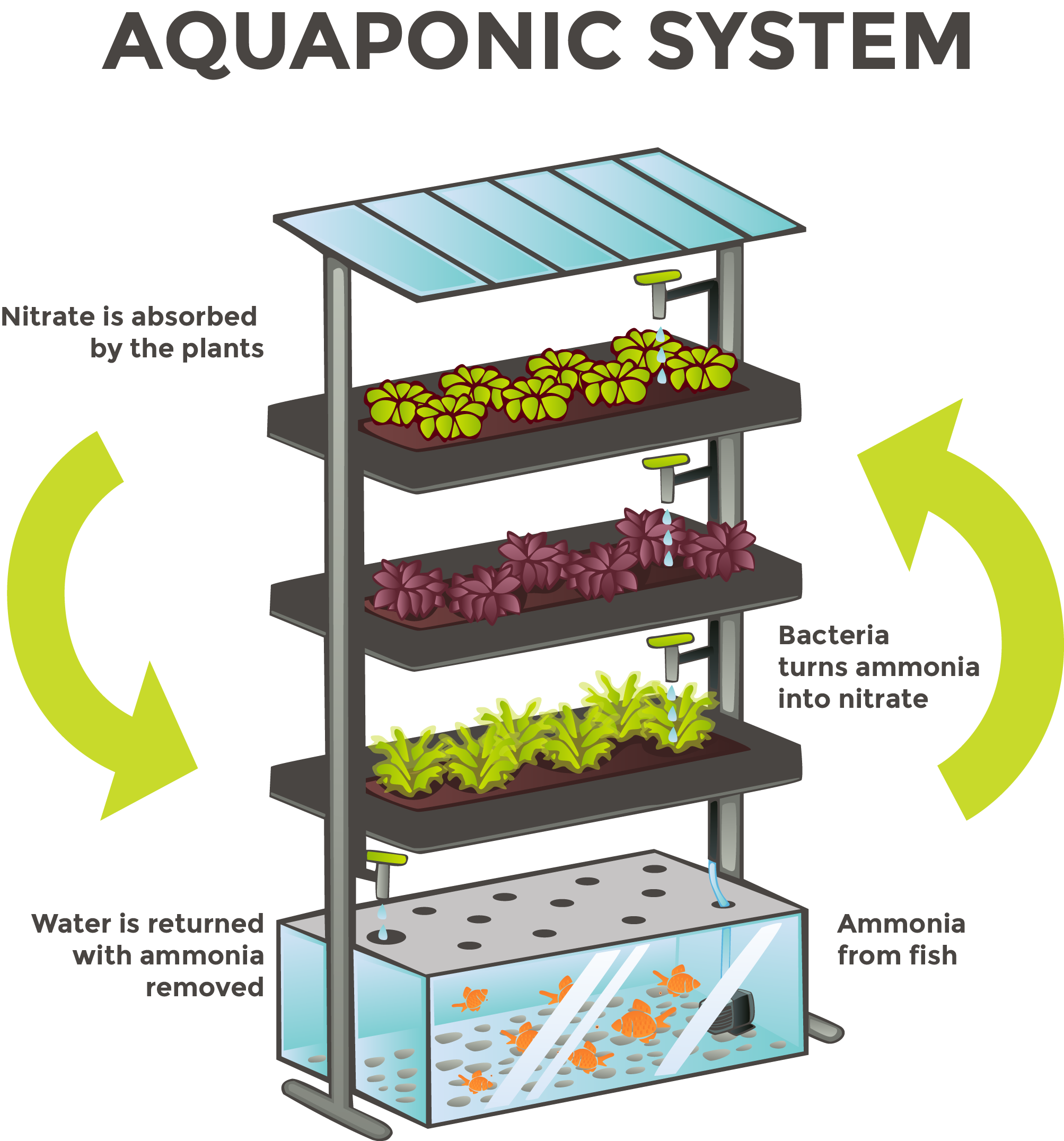 What Is Aquaponics Sustainable Agriculture