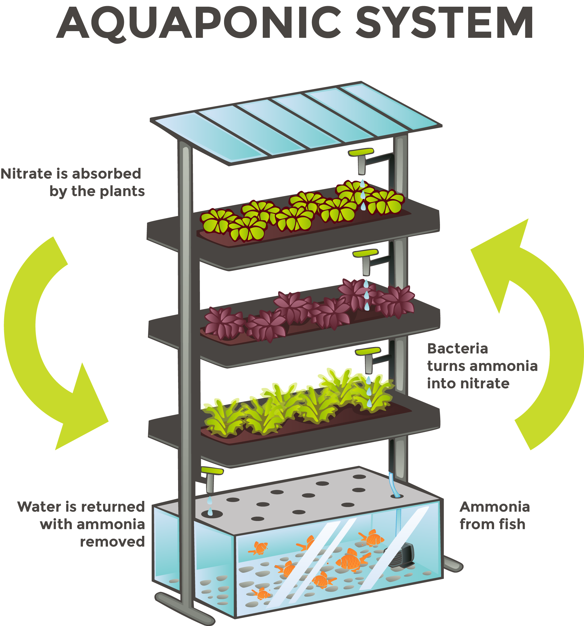 The Needed Revolution Aquaponics And Its Presence In The
