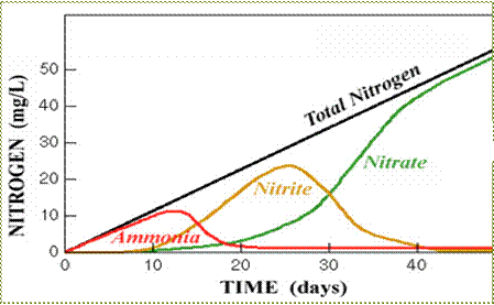 Nitrite an important ion project feed 1010 nitrogen within an aquaponics system must undergo one full cycle before the system stabilizes ccuart Choice Image